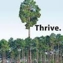 Are you just surviving when you should be thriving?